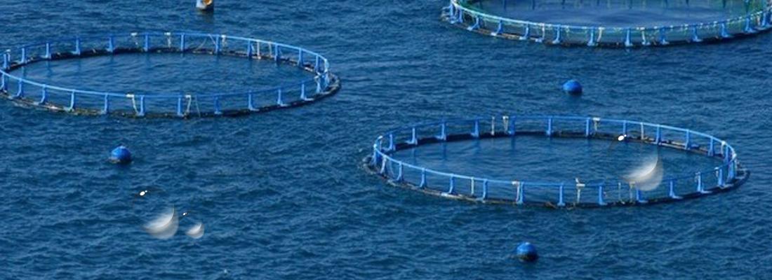 Aquaculture solutions