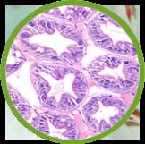 Liptocitro Gen Pro Plus