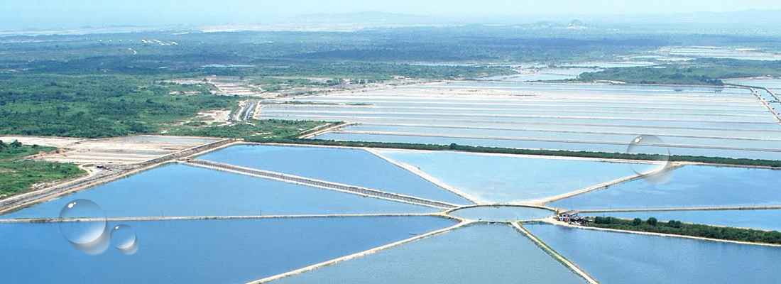 Aquaculture solutions